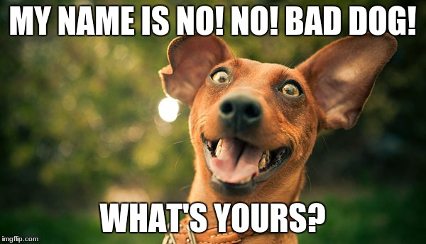 doggy dog | MY NAME IS NO! NO! BAD DOG! WHAT'S YOURS? | image tagged in memes,dogs | made w/ Imgflip meme maker