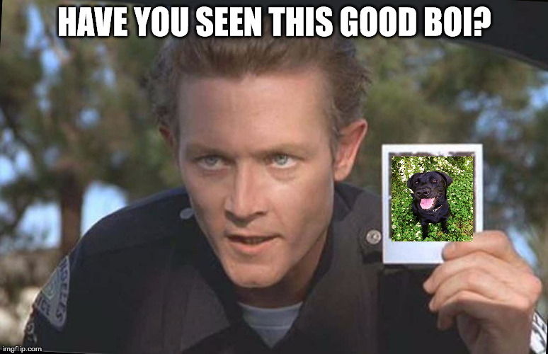 Have You Seen This Boy | HAVE YOU SEEN THIS GOOD BOI? | image tagged in have you seen this boy,AdviceAnimals | made w/ Imgflip meme maker