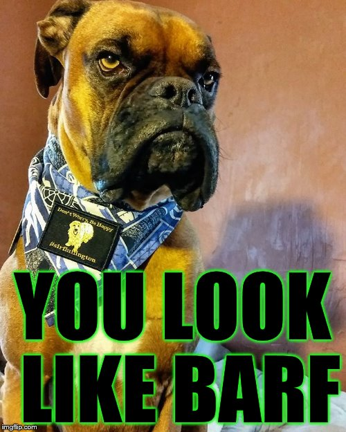 Grumpy Dog | YOU LOOK LIKE BARF | image tagged in grumpy dog | made w/ Imgflip meme maker
