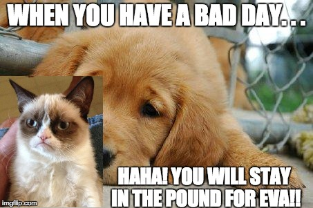sad puppy | WHEN YOU HAVE A BAD DAY. . . HAHA! YOU WILL STAY IN THE POUND FOR EVA!! | image tagged in sad puppy | made w/ Imgflip meme maker
