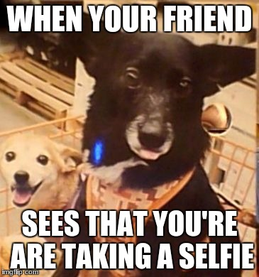 WHEN YOUR FRIEND SEES THAT YOU'RE ARE TAKING A SELFIE | image tagged in doggo selfie | made w/ Imgflip meme maker