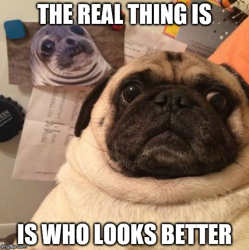 THE REAL THING IS IS WHO LOOKS BETTER | image tagged in funny pug | made w/ Imgflip meme maker