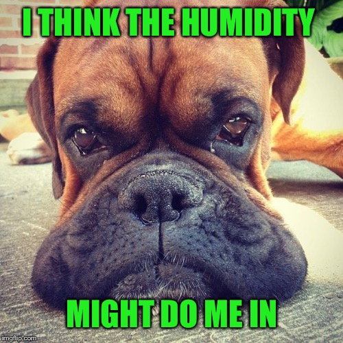 I THINK THE HUMIDITY MIGHT DO ME IN | made w/ Imgflip meme maker