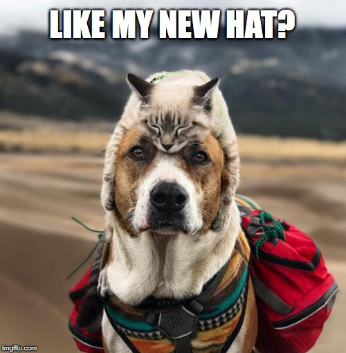 Pack-it Pooch | LIKE MY NEW HAT? | image tagged in dog and cat | made w/ Imgflip meme maker