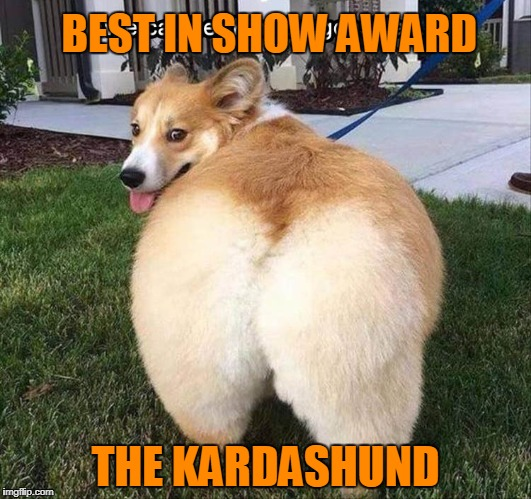 The Westminster Kennel Club Congratulates All Participants! | BEST IN SHOW AWARD THE KARDASHUND | image tagged in funny dog,kim kardashian | made w/ Imgflip meme maker