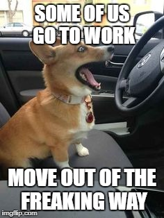 SOME OF US GO TO WORK MOVE OUT OF THE FREAKING WAY | image tagged in corgi | made w/ Imgflip meme maker