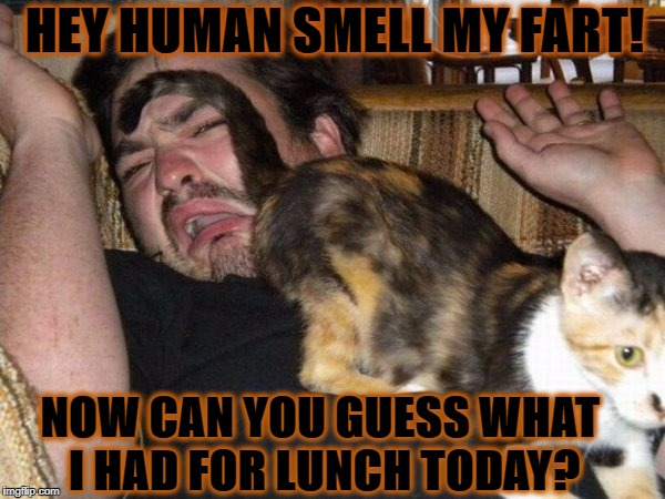 HEY HUMAN SMELL MY FART! NOW CAN YOU GUESS WHAT I HAD FOR LUNCH TODAY? | image tagged in fart face | made w/ Imgflip meme maker