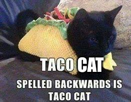 Taco Cat - taC ocaT | CAT | image tagged in taco cat - tac ocat | made w/ Imgflip meme maker