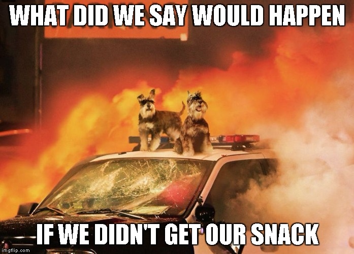 WHAT DID WE SAY WOULD HAPPEN IF WE DIDN'T GET OUR SNACK | image tagged in dogs | made w/ Imgflip meme maker