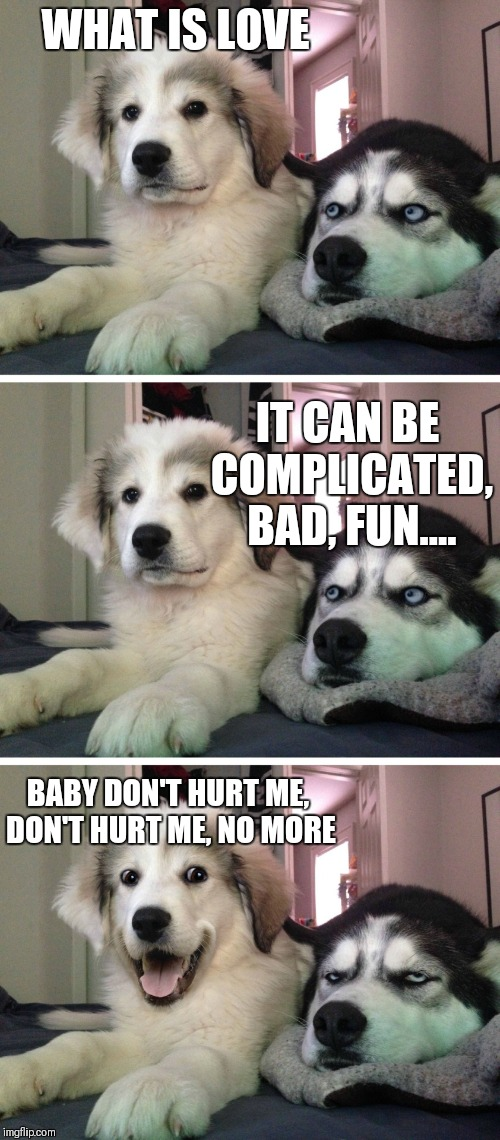 I know it's a day late, but I thought this would be a good Valentine's day one | WHAT IS LOVE IT CAN BE COMPLICATED, BAD, FUN.... BABY DON'T HURT ME, DON'T HURT ME, NO MORE | image tagged in bad pun dogs | made w/ Imgflip meme maker