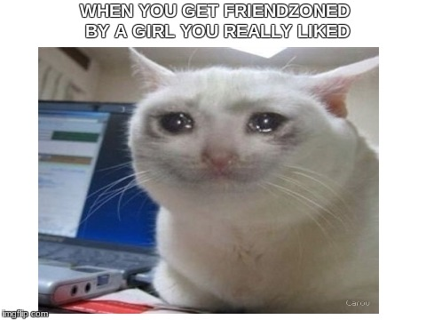 friendzoned | WHEN YOU GET FRIENDZONED BY A GIRL YOU REALLY LIKED | image tagged in dank memes,cats | made w/ Imgflip meme maker