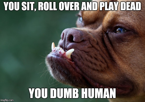 Stupid human | YOU SIT, ROLL OVER AND PLAY DEAD YOU DUMB HUMAN | image tagged in human,humanity,dog,dogs,pitbull | made w/ Imgflip meme maker