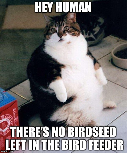 fat cat | HEY HUMAN THERE'S NO BIRDSEED LEFT IN THE BIRD FEEDER | image tagged in fat cat,memes,cat | made w/ Imgflip meme maker