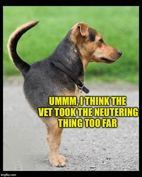 Something's off | UMMM, I THINK THE VET TOOK THE NEUTERING THING TOO FAR | image tagged in dog,pet humor | made w/ Imgflip meme maker
