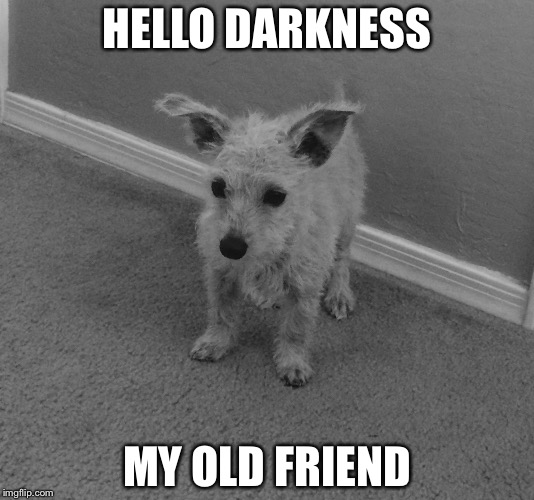 HELLO DARKNESS MY OLD FRIEND | image tagged in sad fluffball | made w/ Imgflip meme maker