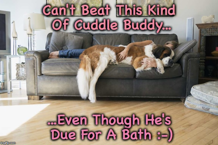 Cuddle Buddies :-) | Can't Beat This Kind Of Cuddle Buddy... ...Even Though He's Due For A Bath :-) | image tagged in st bernard | made w/ Imgflip meme maker
