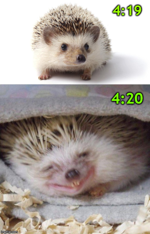 Smonk weed | 4:19 4:20 | image tagged in 420,hedgehog | made w/ Imgflip meme maker