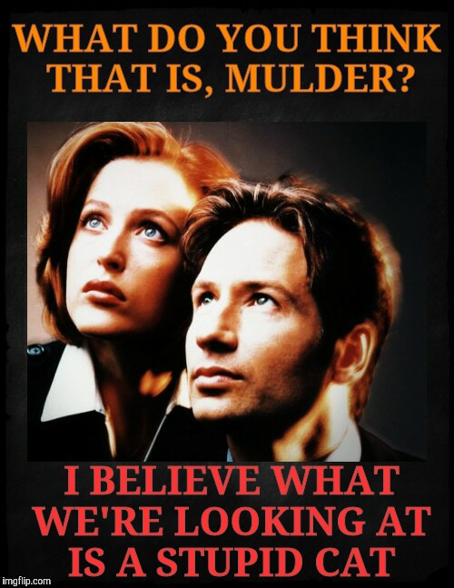 Mulder and Scully gaze to whatever,,, | WHAT DO YOU THINK THAT IS, MULDER? I BELIEVE WHAT WE'RE LOOKING AT   IS A STUPID CAT | image tagged in mulder and scully gaze to whatever | made w/ Imgflip meme maker