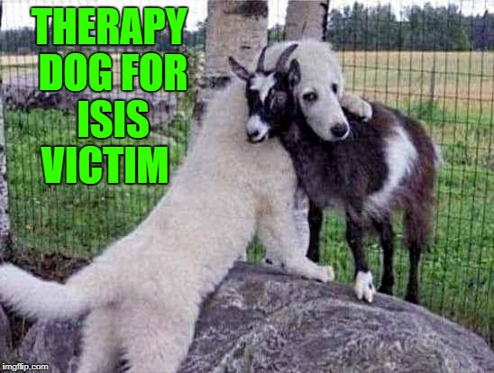 therapy dog for ISIS victim | THERAPY DOG FOR ISIS VICTIM | image tagged in victim | made w/ Imgflip meme maker