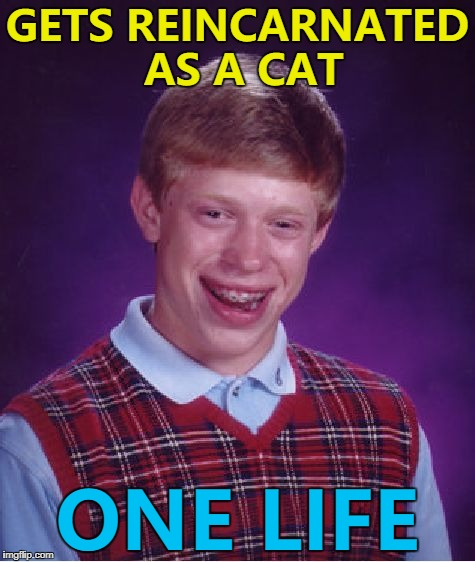 Why are cats the only animal with multiple lives?  | GETS REINCARNATED AS A CAT ONE LIFE | image tagged in memes,bad luck brian,cats,animals,reincarnation | made w/ Imgflip meme maker