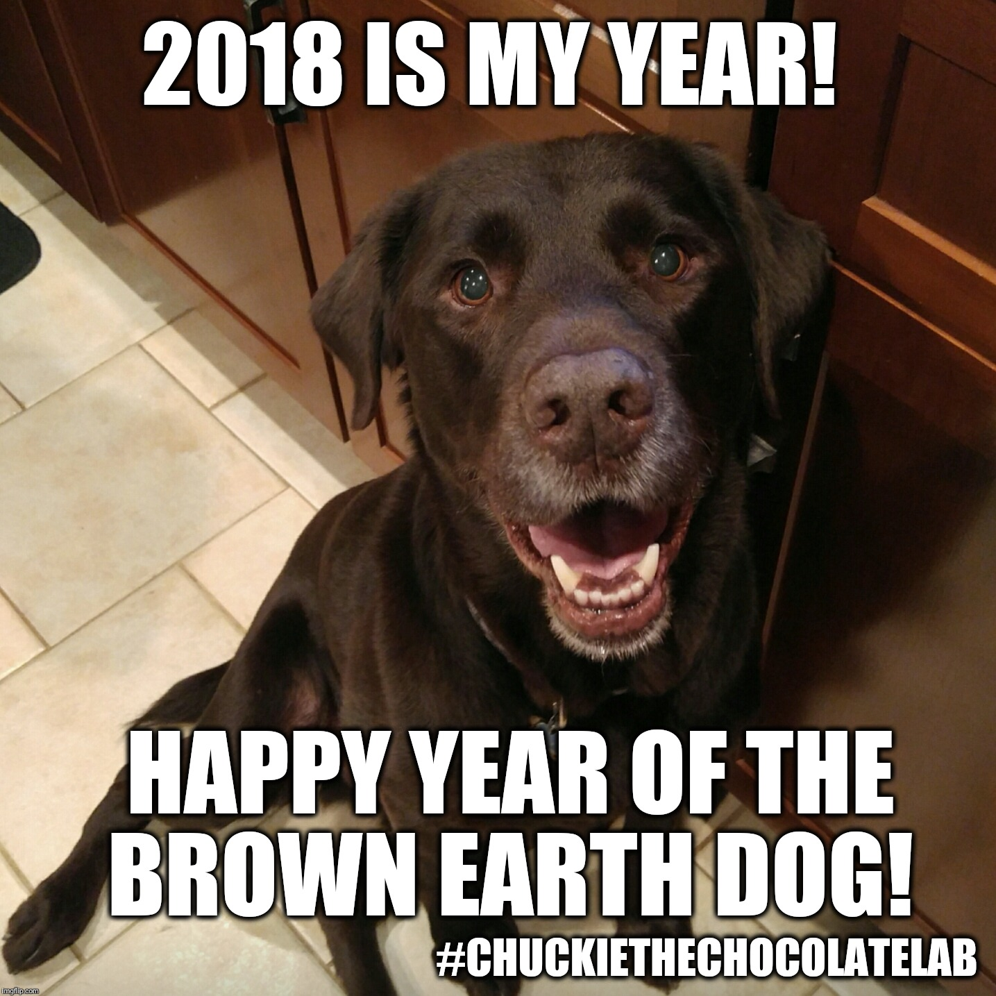 Happy Chinese New Year 2018  | 2018 IS MY YEAR! #CHUCKIETHECHOCOLATELAB HAPPY YEAR OF THE BROWN EARTH DOG! | image tagged in chuckie the chocolate lab teamchuckie,2018,chinese new year,year of the dog,dogs,memes | made w/ Imgflip meme maker