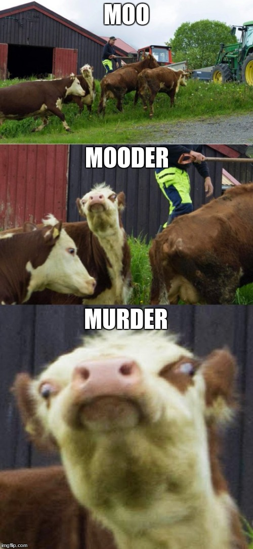 Bad pun cow  | MOO MOODER MURDER | image tagged in bad pun cow | made w/ Imgflip meme maker