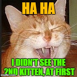 HA HA I DIDN'T SEE THE 2ND KITTEN, AT FIRST | made w/ Imgflip meme maker