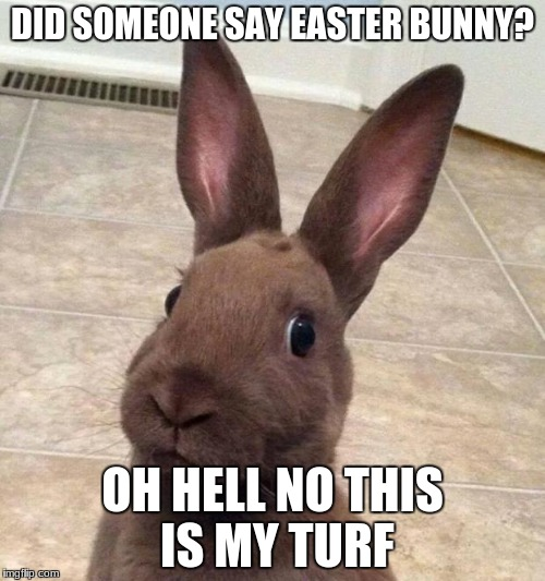 Really? Rabbit | DID SOMEONE SAY EASTER BUNNY? OH HELL NO THIS IS MY TURF | image tagged in really rabbit | made w/ Imgflip meme maker