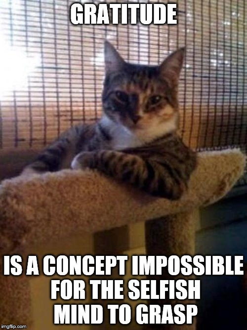 The Most Interesting Cat In The World Meme | GRATITUDE IS A CONCEPT IMPOSSIBLE FOR THE SELFISH MIND TO GRASP | image tagged in memes,the most interesting cat in the world | made w/ Imgflip meme maker