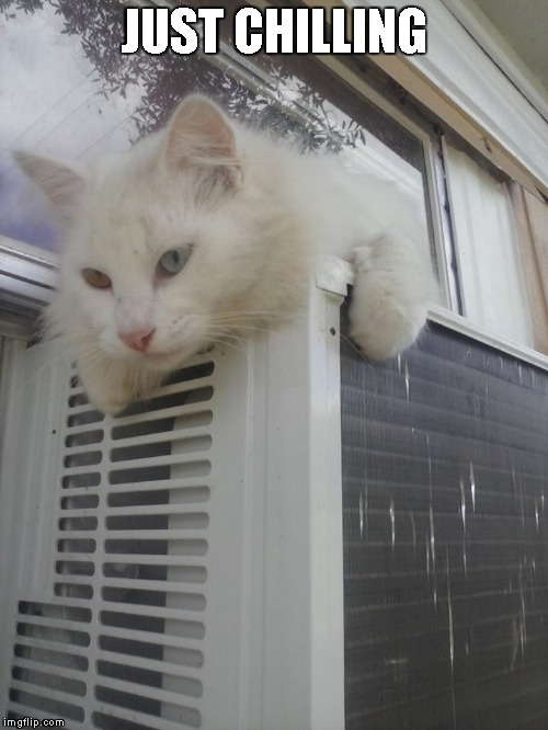 Conan chilling | JUST CHILLING | image tagged in cats,kitty,funny,cute | made w/ Imgflip meme maker
