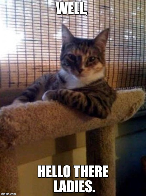 cats | WELL, HELLO THERE LADIES. | image tagged in cats | made w/ Imgflip meme maker