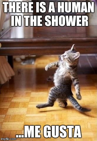 Cool Cat Stroll Meme | THERE IS A HUMAN IN THE SHOWER ...ME GUSTA | image tagged in memes,cool cat stroll | made w/ Imgflip meme maker