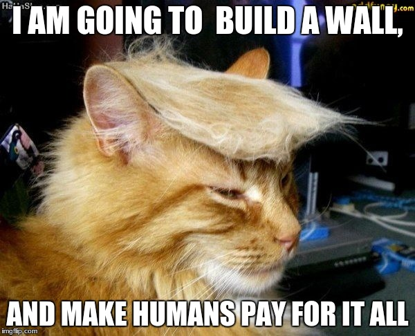 donald trump cat |  I AM GOING TO  BUILD A WALL, AND MAKE HUMANS PAY FOR IT ALL | image tagged in donald trump cat | made w/ Imgflip meme maker