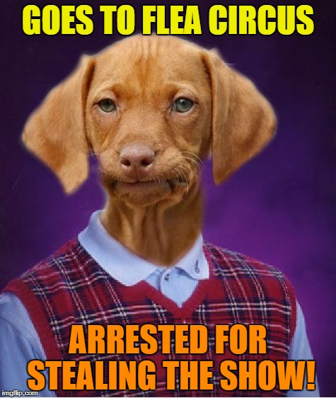 Bad Luck Raydog's at it again! | GOES TO FLEA CIRCUS ARRESTED FOR STEALING THE SHOW! | image tagged in raydog,bad luck raydog,circus | made w/ Imgflip meme maker