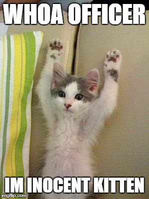 Hands up kitten | WHOA OFFICER IM INOCENT KITTEN | image tagged in hands up kitten | made w/ Imgflip meme maker