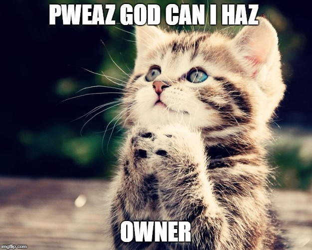 PWEAZ GOD CAN I HAZ OWNER | image tagged in kitten can i haz | made w/ Imgflip meme maker