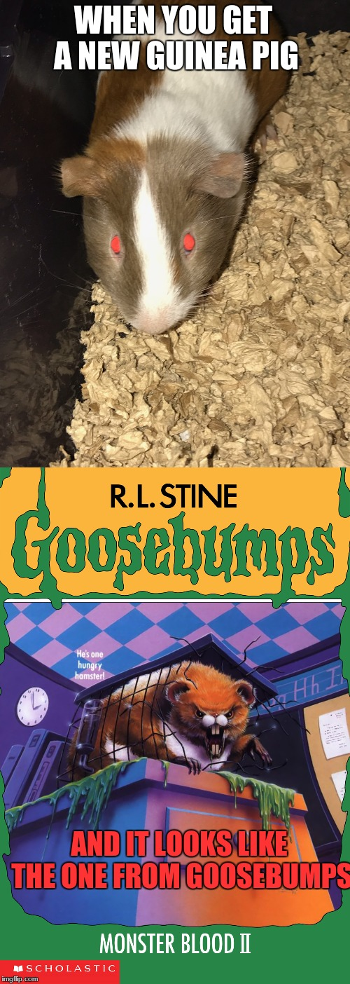 Devil incarnate | WHEN YOU GET A NEW GUINEA PIG AND IT LOOKS LIKE THE ONE FROM GOOSEBUMPS | image tagged in memes,funny,goosebumps,guinea pig,pets | made w/ Imgflip meme maker