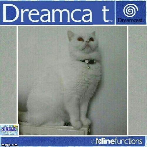 SEGA Dreamcat | image tagged in dreamcat,dreamcast,sega,cats,gaming,video games | made w/ Imgflip meme maker
