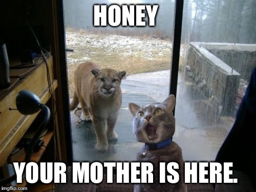 HONEY YOUR MOTHER IS HERE. | image tagged in cat and lion | made w/ Imgflip meme maker