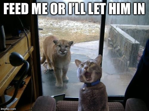 Cat and lion | FEED ME OR I'LL LET HIM IN | image tagged in cats,funny animals,funny cats | made w/ Imgflip meme maker