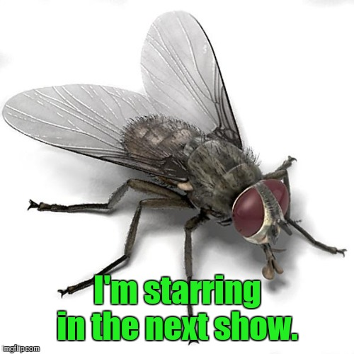I'm starring in the next show. | made w/ Imgflip meme maker