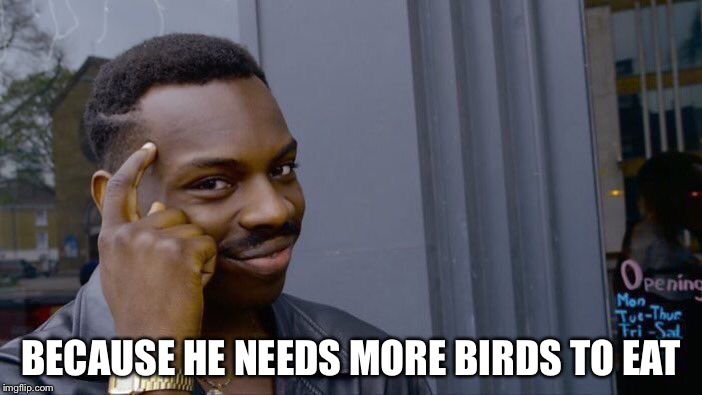 Roll Safe Think About It Meme | BECAUSE HE NEEDS MORE BIRDS TO EAT | image tagged in memes,roll safe think about it | made w/ Imgflip meme maker