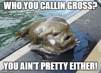 gross fish | WHO YOU CALLIN GROSS? YOU AIN'T PRETTY EITHER! | image tagged in gross fish | made w/ Imgflip meme maker