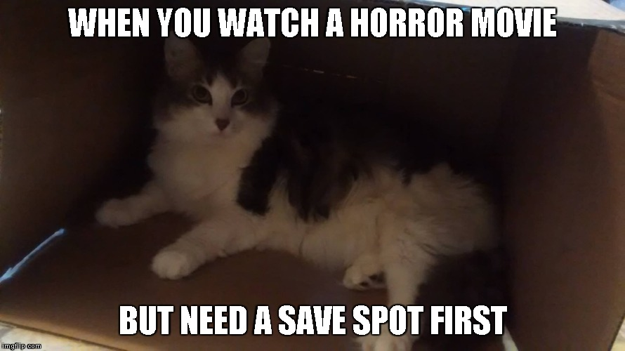Medusa hiding | WHEN YOU WATCH A HORROR MOVIE BUT NEED A SAVE SPOT FIRST | image tagged in cats,funny,kitty | made w/ Imgflip meme maker