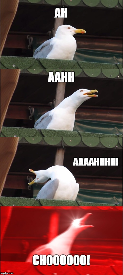 I couldn't think of anything for my 3rd submission and plus......I just sneezed | AH AAHH AAAAHHHH! CHOOOOOO! | image tagged in memes,inhaling seagull | made w/ Imgflip meme maker