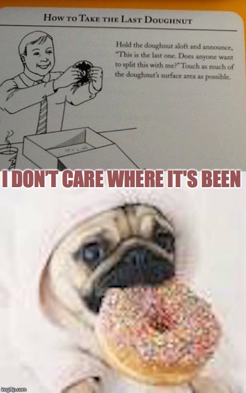 The Last Doughnut |  I DON'T CARE WHERE IT'S BEEN | image tagged in doughnuts,pug | made w/ Imgflip meme maker