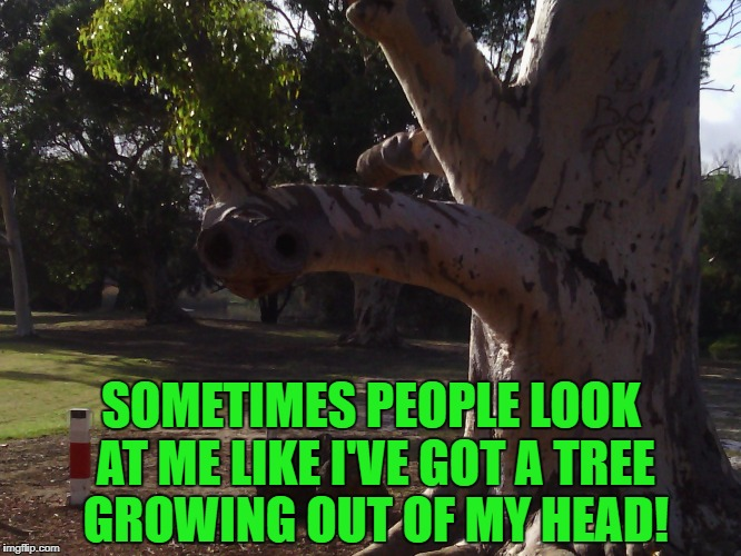 Some days.... | SOMETIMES PEOPLE LOOK AT ME LIKE I'VE GOT A TREE GROWING OUT OF MY HEAD! | image tagged in tree,weird stuff | made w/ Imgflip meme maker