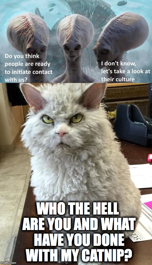 Pompous Albert Is Pissed | WHO THE HELL ARE YOU AND WHAT HAVE YOU DONE WITH MY CATNIP? | image tagged in where's my catnip | made w/ Imgflip meme maker