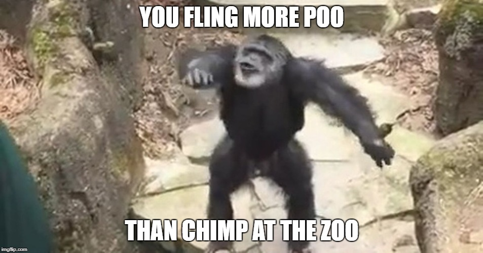 YOU FLING MORE POO THAN CHIMP AT THE ZOO | image tagged in poo chucking chimp | made w/ Imgflip meme maker