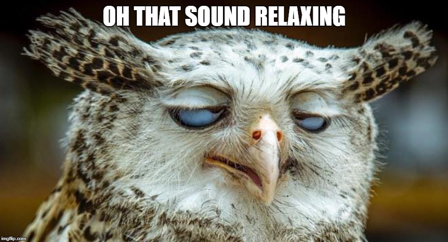relaxed owl | OH THAT SOUND RELAXING | image tagged in relaxed owl | made w/ Imgflip meme maker